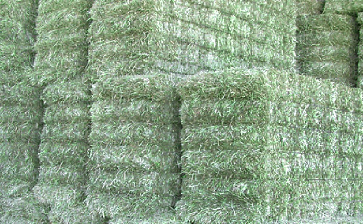 forrajes deshidratados: alfalfa, veza, raigrass