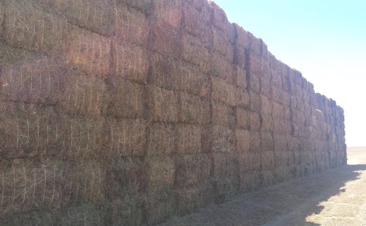 forrajes en rama: alfalfa, veza, avena, raigrass