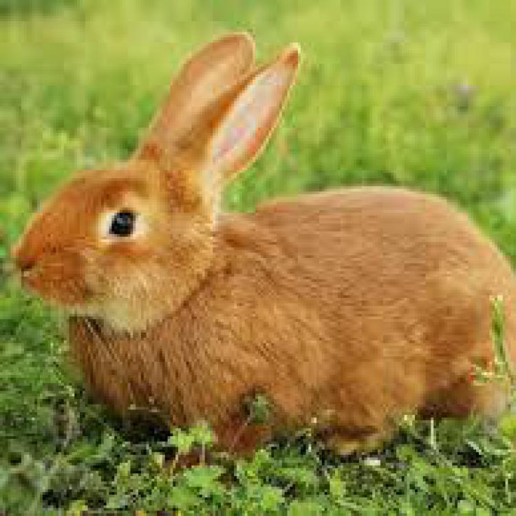 Nanta. pienso conejos