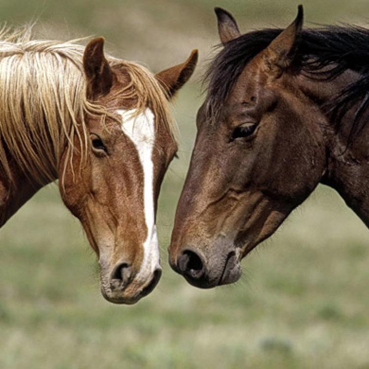 Nanta. Pienso caballos. Gama Pavo Basic