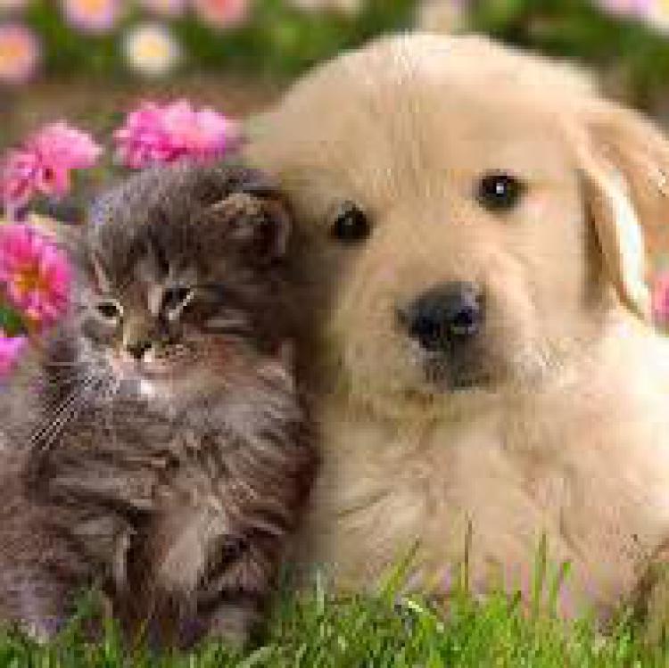 Nanta. Pienso animales de compañia: perros y gatos