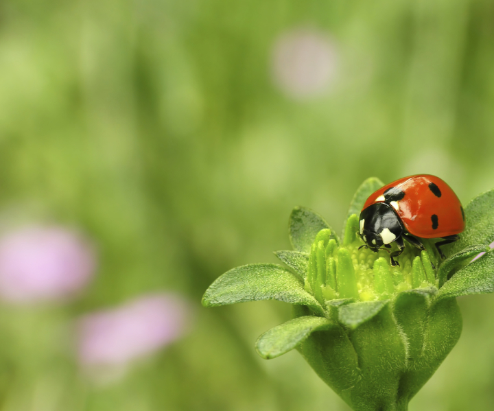 fitosanitarios, herbicidas, insecticidas